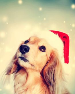 Santa's Grotto for Dogs