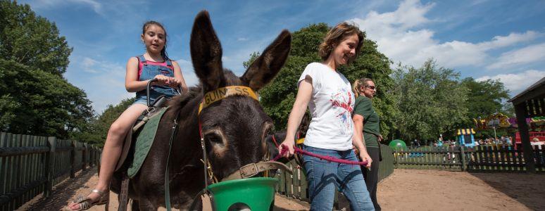 Donkey rides at Markeaton Park