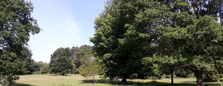 Clemson's Park view with 5 oak tree species