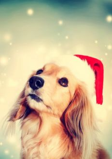Image for Santa's Grotto for Dogs
