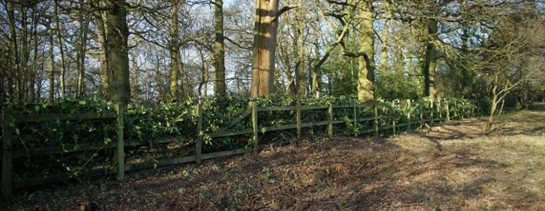 Fencing in Chaddesden Wood after the hedgelaying