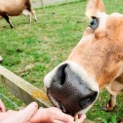 National Forest Adventure Farm - Opening 12 Apr