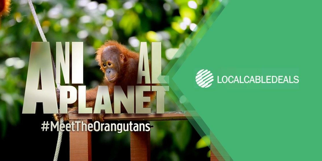 What Channel is Animal Planet on Optimum
