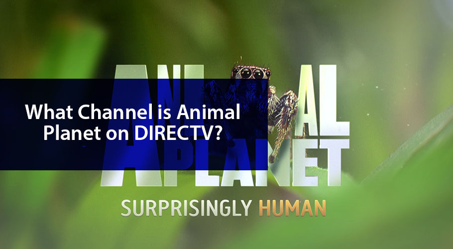 What Channel İs Animal Planet On Directv