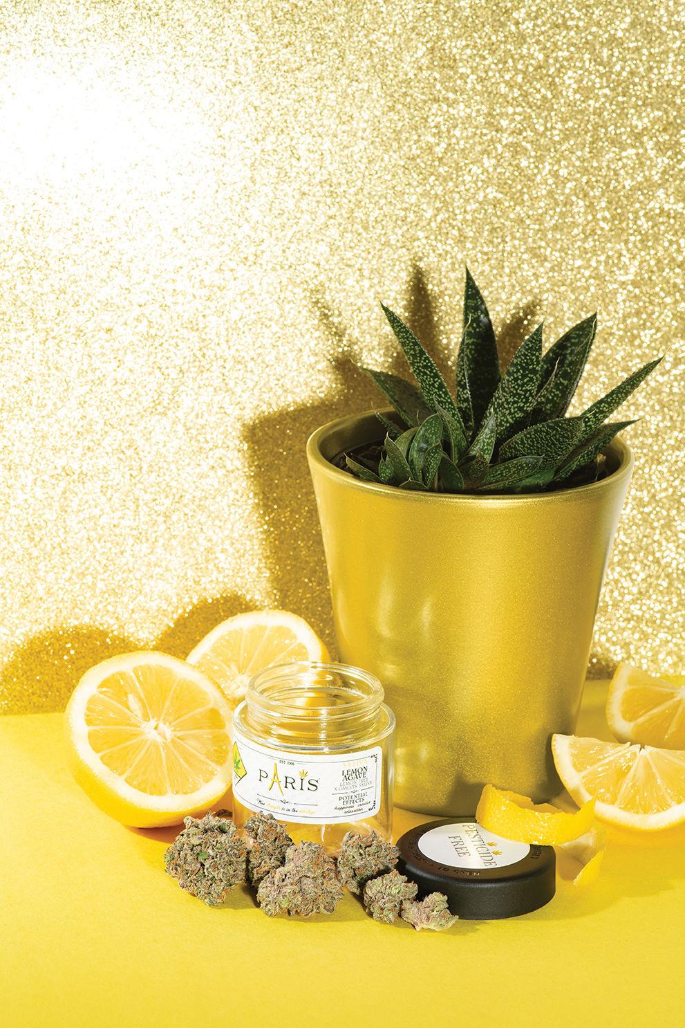 Lemon Agave