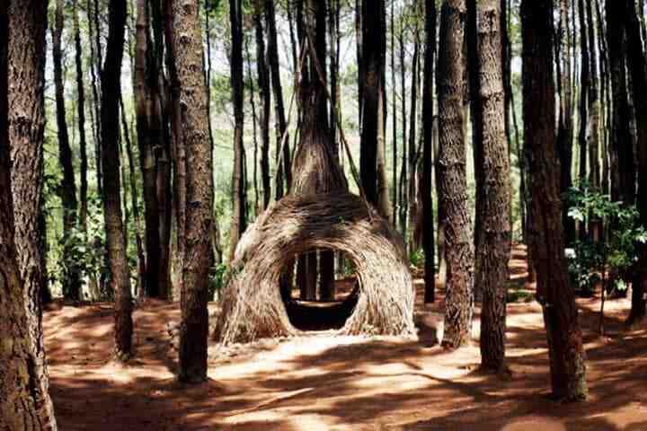 Pinus Pengger - Tempat hunting foto di Jogja