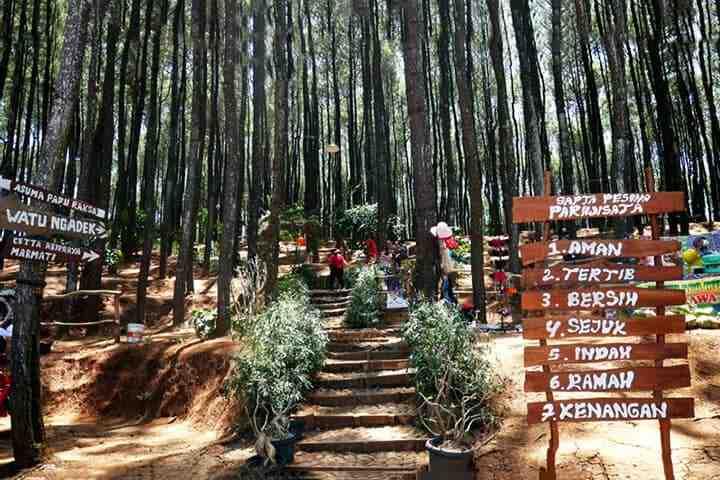 Pinus Pengger, Imogiri, Dlingo, Bantul - tempat wisata murah di Jogja