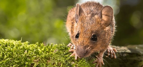 how to protect - rodent entry