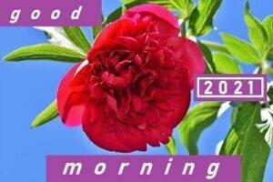 good morning 2021 for whatsapp