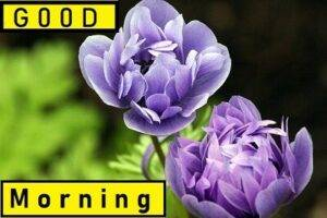 good morning happy images