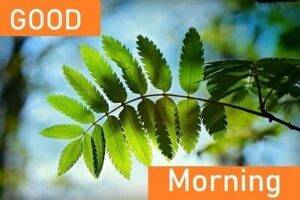 good morning leaf