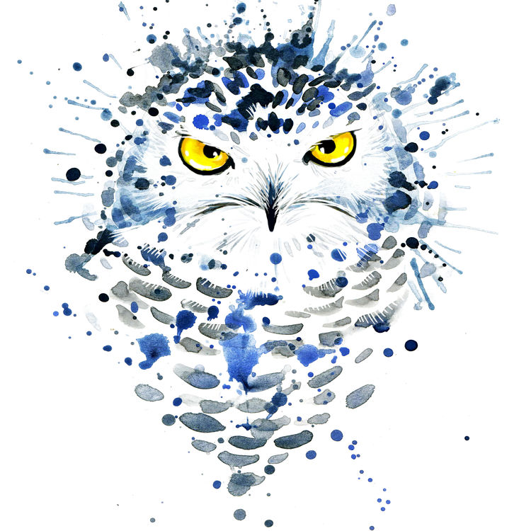 Tommy, the Blue Owl