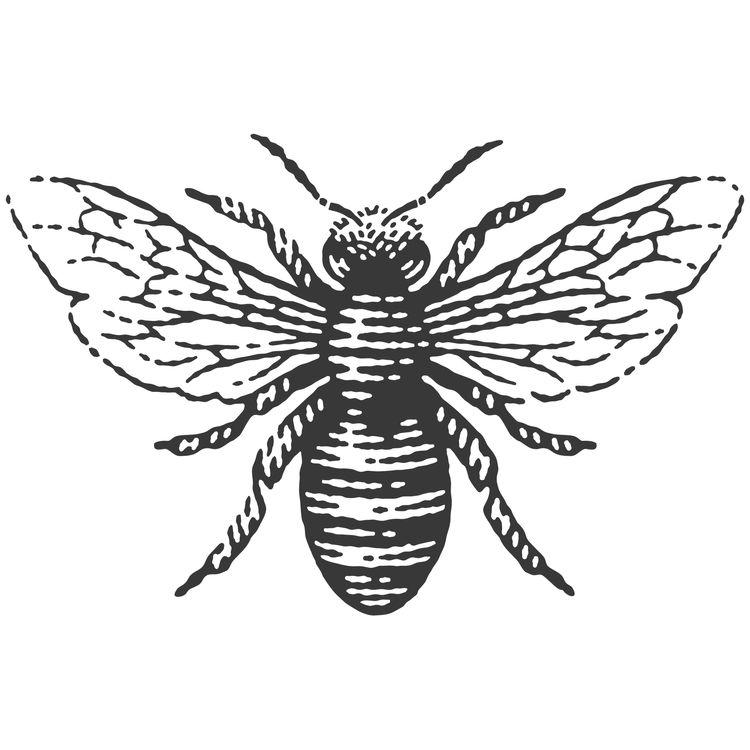 Wings Open Bee