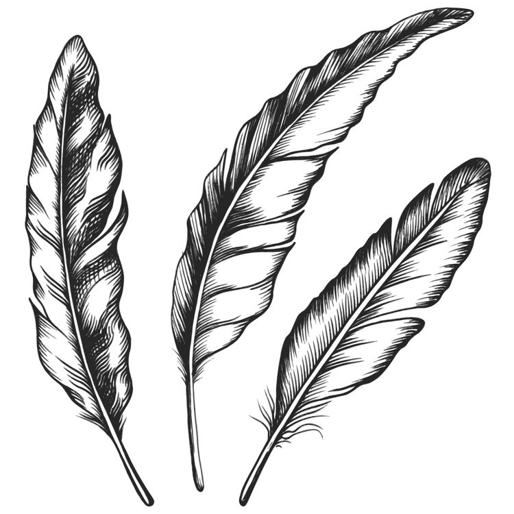 Three Black and White Feathers