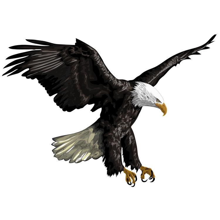 Strong Landing Eagle