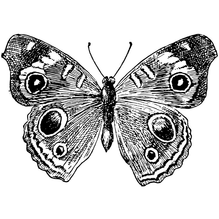 Emma, the Butterfly