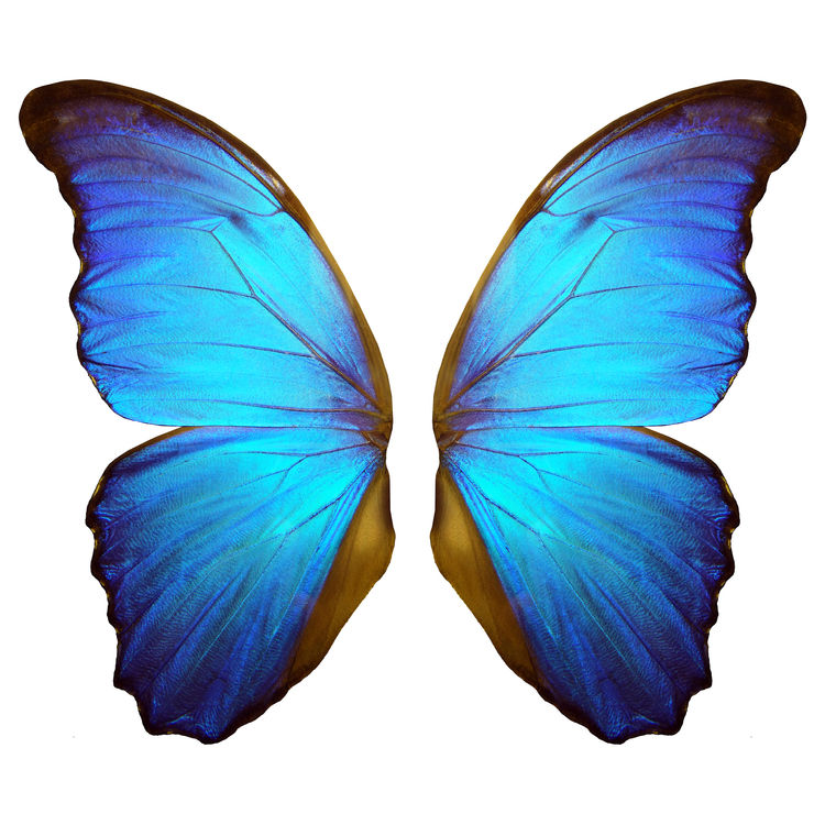 Taylor, the Butterfly