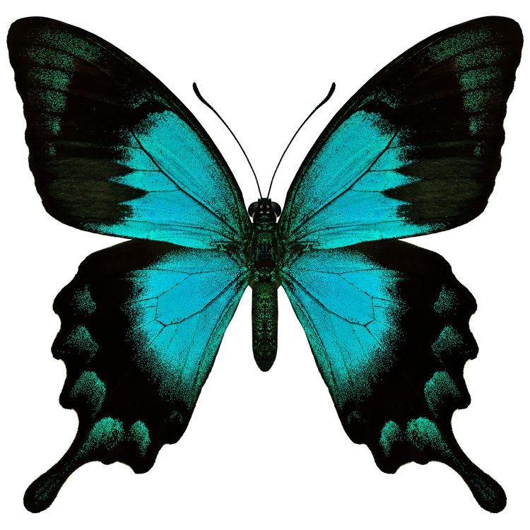 Eden, the Butterfly