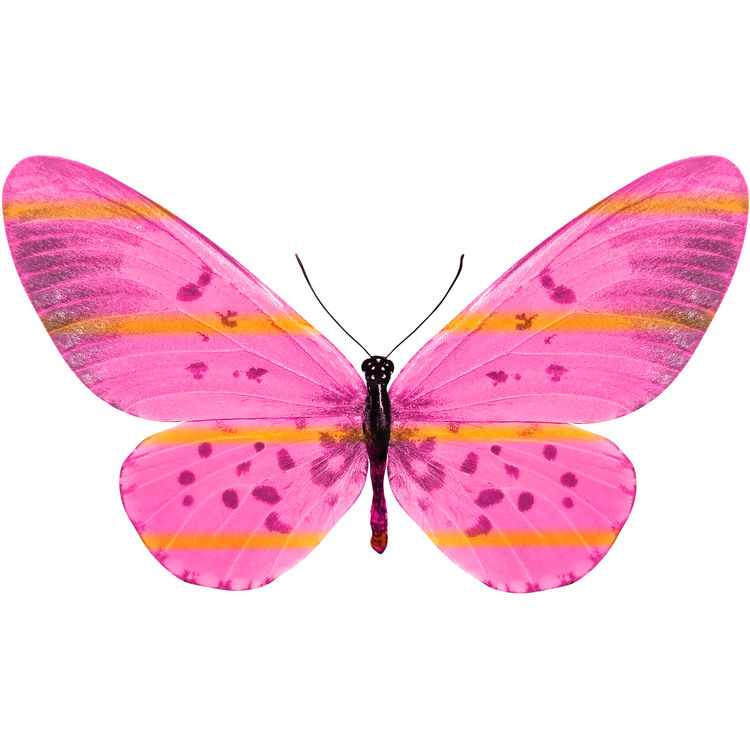 Sofia, the Butterfly