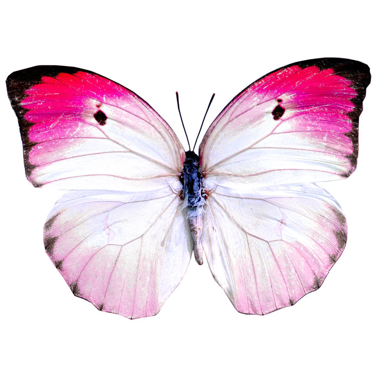 Isabel, the Butterfly