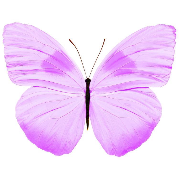 Juliana, the Butterfly