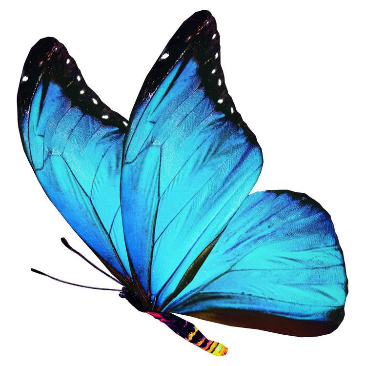 Londyn, the Butterfly