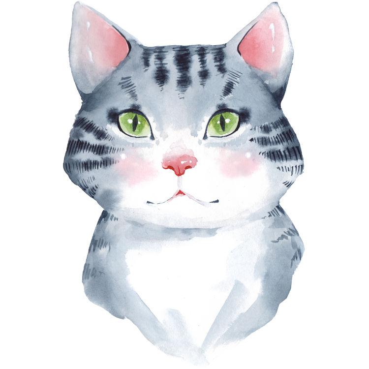 Lola, the Blushy Cat