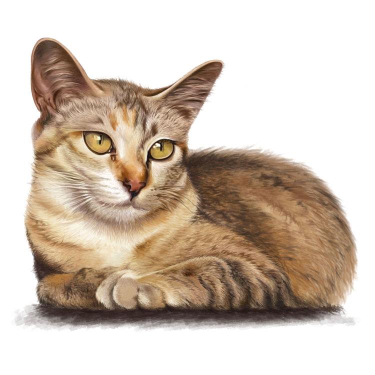Hazel Eyed Cat