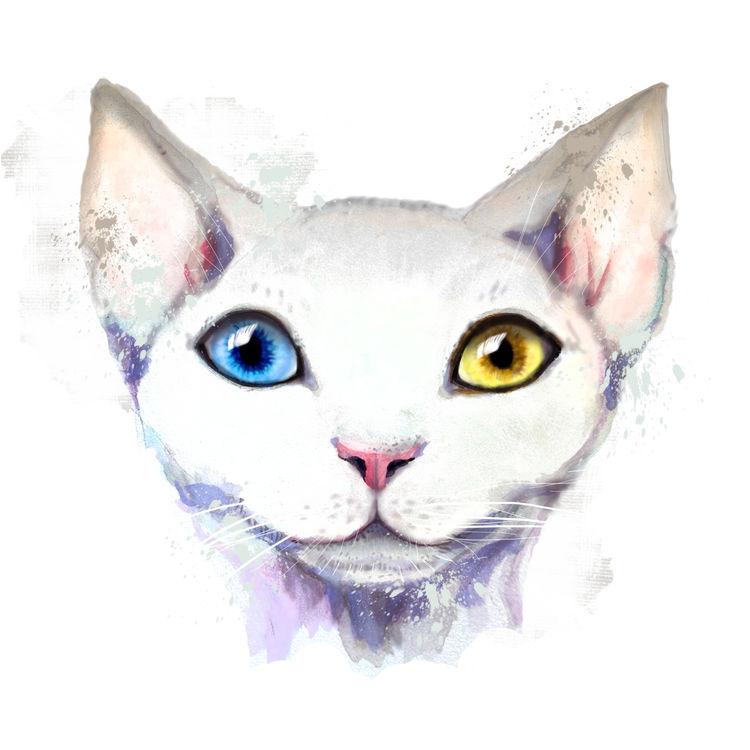 Heterochromia Stevie, the Cat