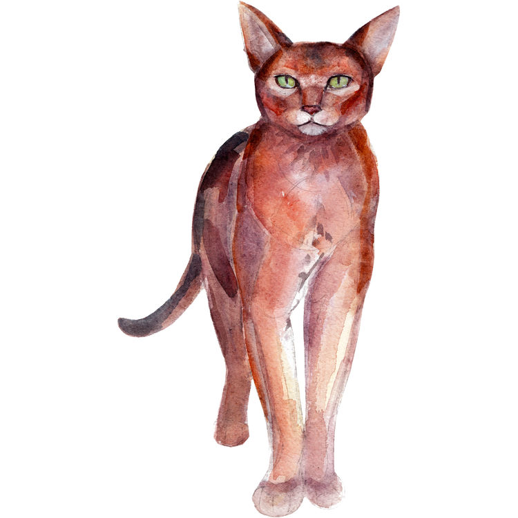 Flora, the Cat