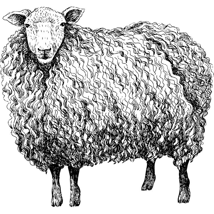 David, the Sheep