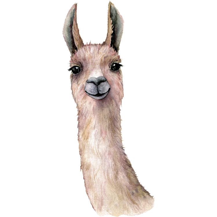 Watercolor Bobby, the Llama