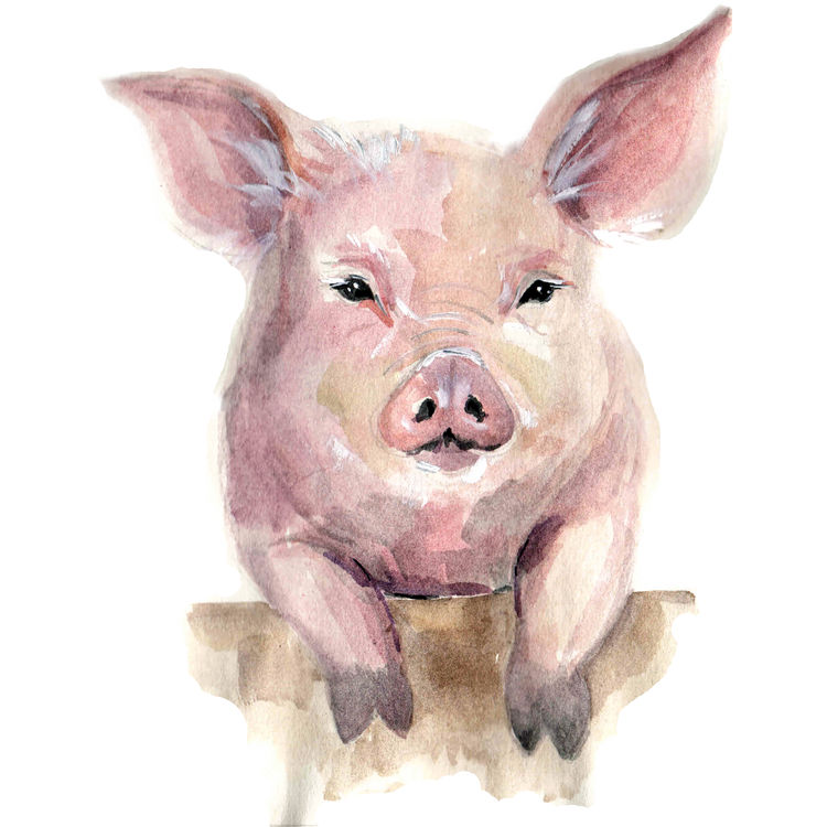 Watercolor Charlotte, the Pig