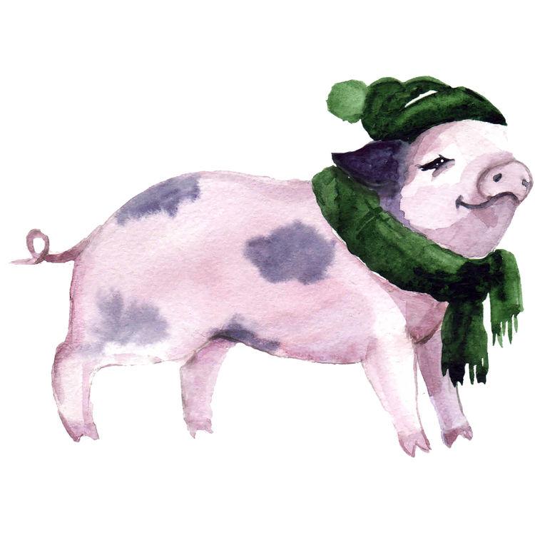 Watercolor Winter Pig