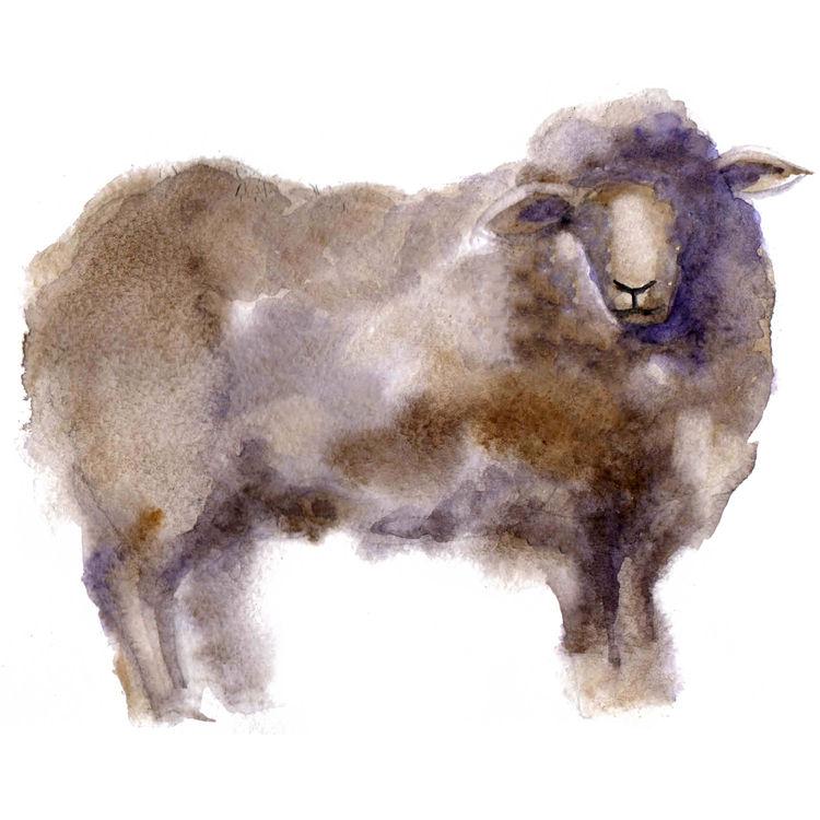 Watercolor Douglas, the Sheep