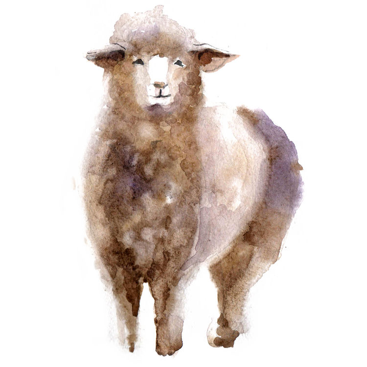 Watercolor Betty, the Sheep