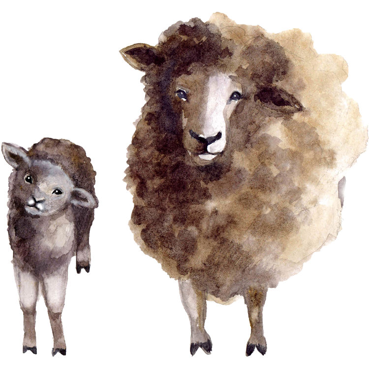 Watercolor Momma and Baby Sheep