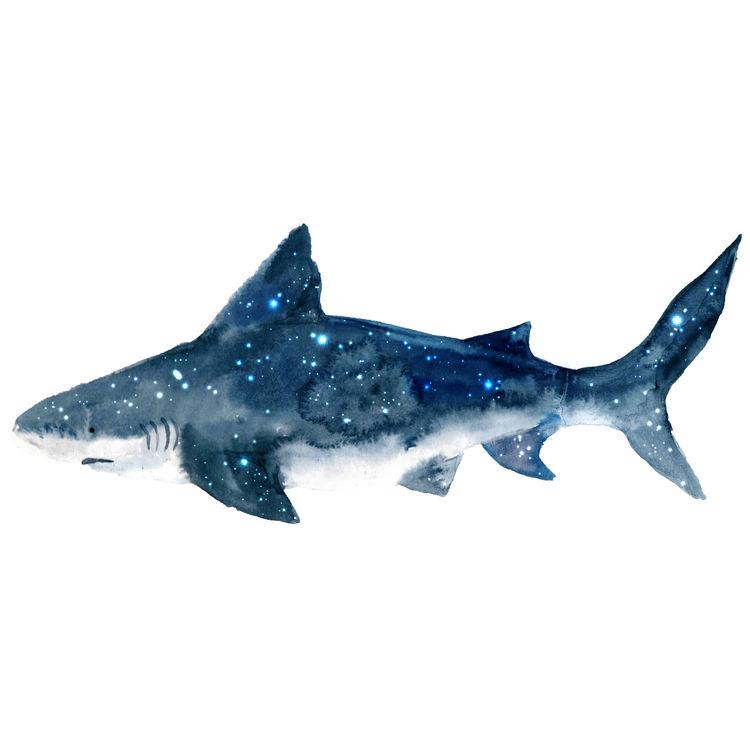 Ralphie, the Shark