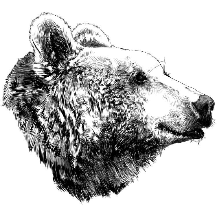 Side Looking Bear