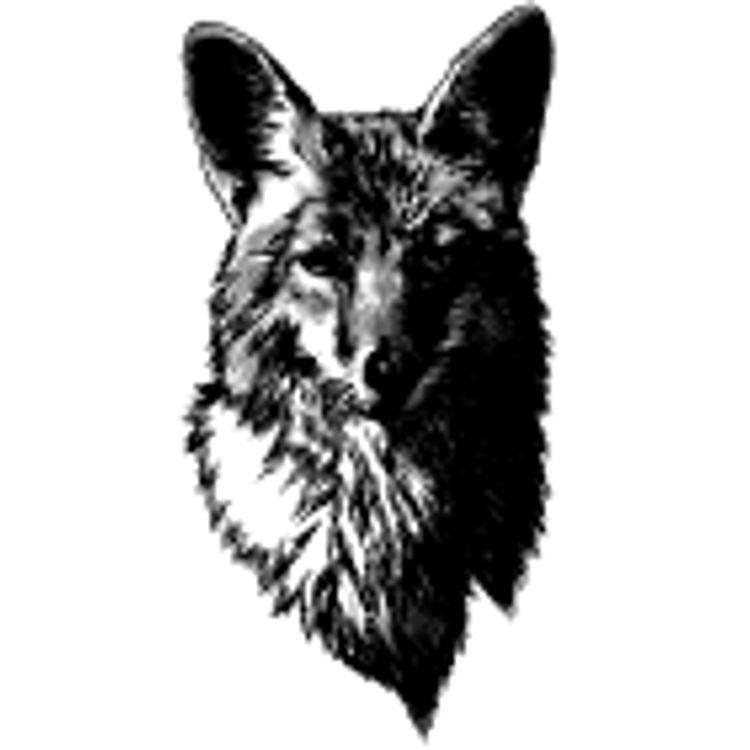 Dark and Confident Fox