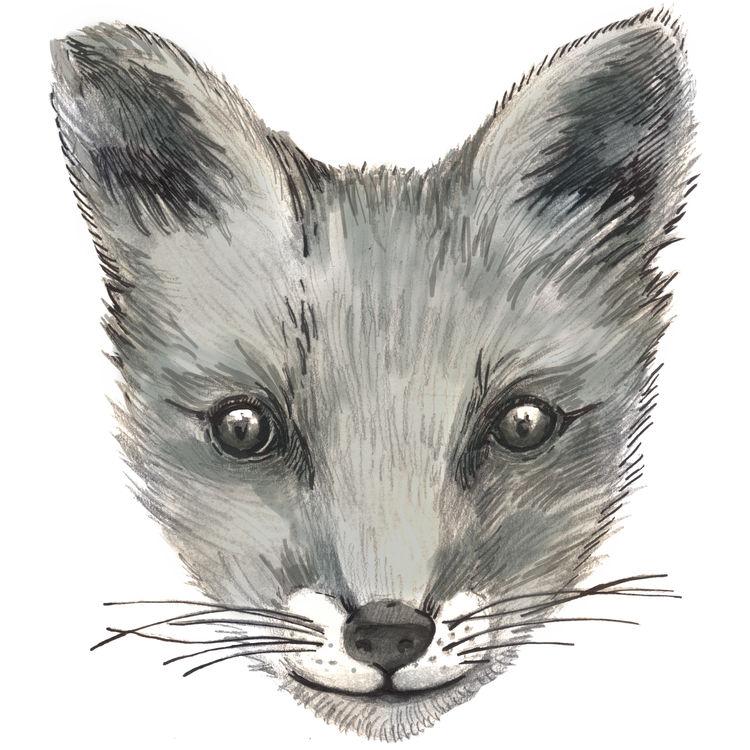 Mr. Fantastic Fox