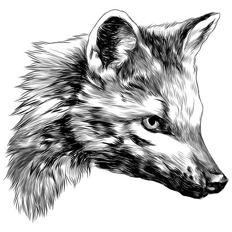 Preying Fox