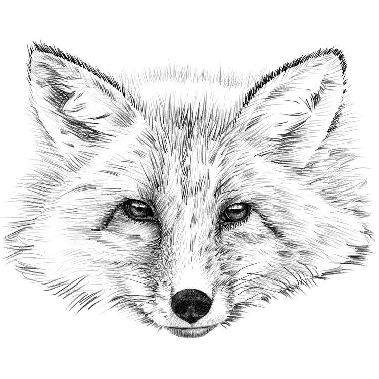 Stevie, the Fox