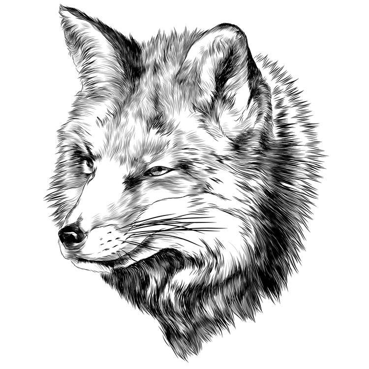 Side Looking Fox