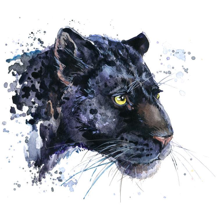 Midnight Jaguar