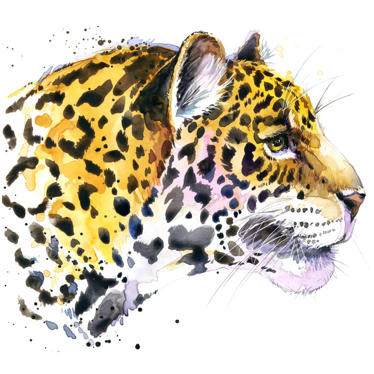 Side Looking Tiger