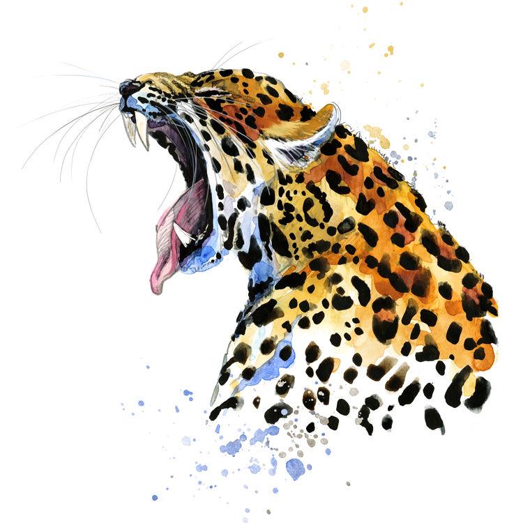 Big Yawn Tiger