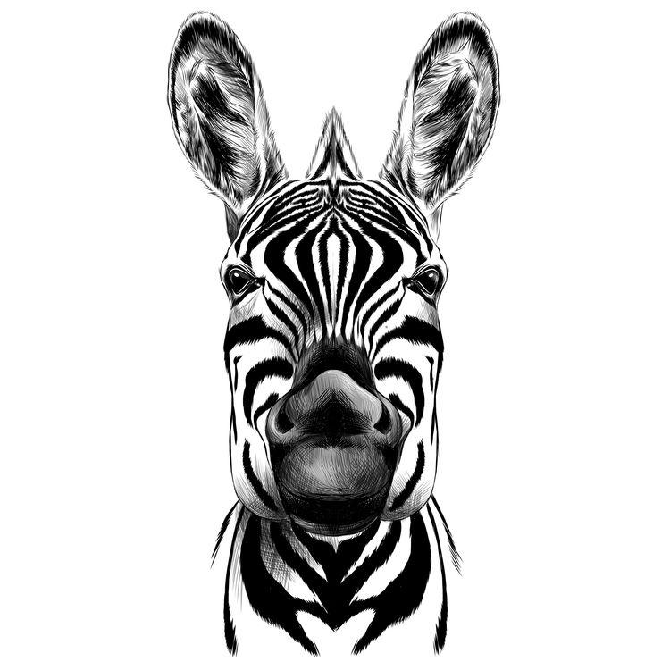 Tyler, the Zebra