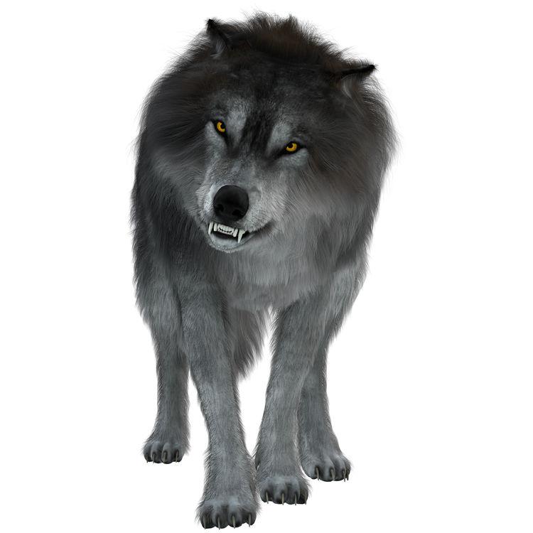 John, the Wolf