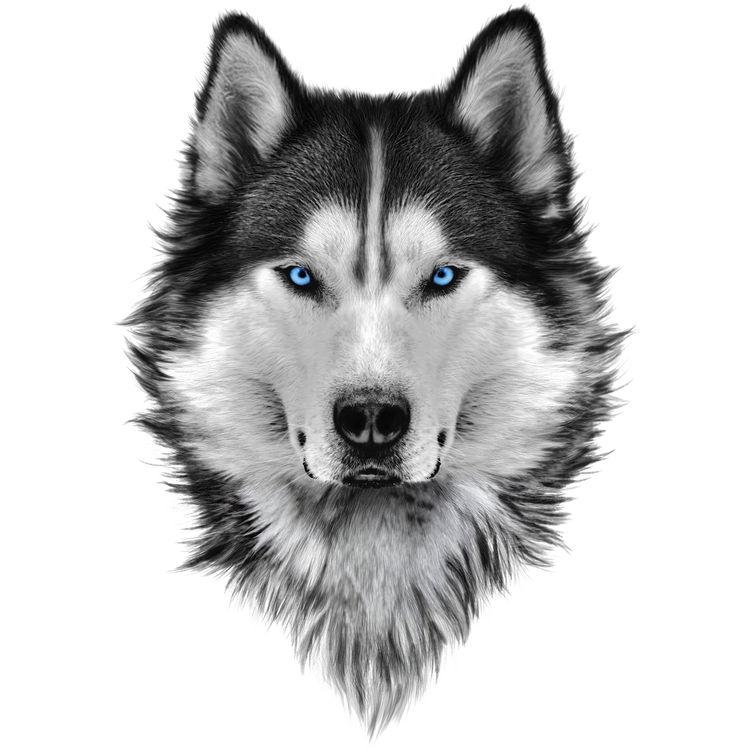 Crystal Blue Eyed Wolf